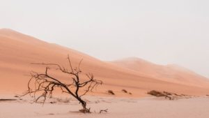 A photo of a lone tree in the middle of the desert.