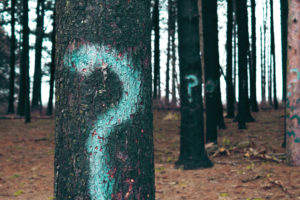 A forest in which many trees are graffitied with question marks.
